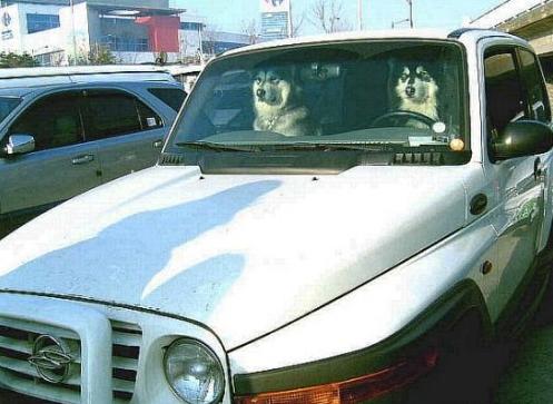 개란도.PNG